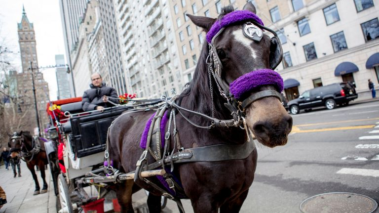 Horse-drawn carriages will be required to pick up and drop off passengers inside Central Park, rather than on the street.