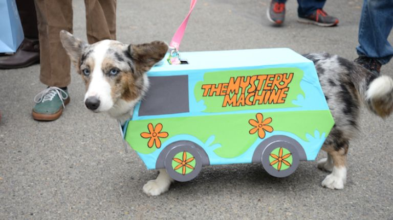 Malygos, a 3-year-old Corgi, dressed as the Mystery Machine, the main mode of transportation for Fred, Shaggy, Daphne, Velma and Scooby-Doo.