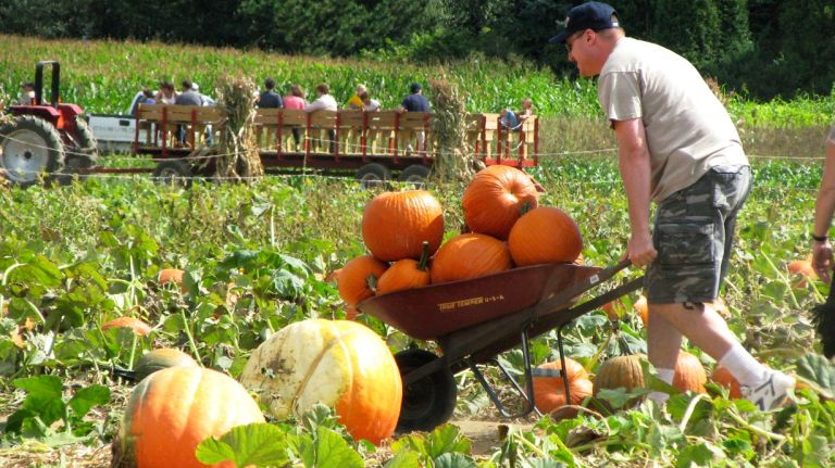 Fall fun in and around NYC: Apple and pumpkin picking, corn mazes and vineyards